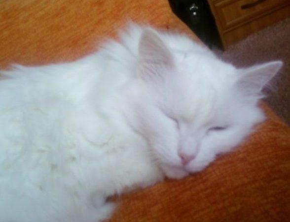 Приключения Белого Кота